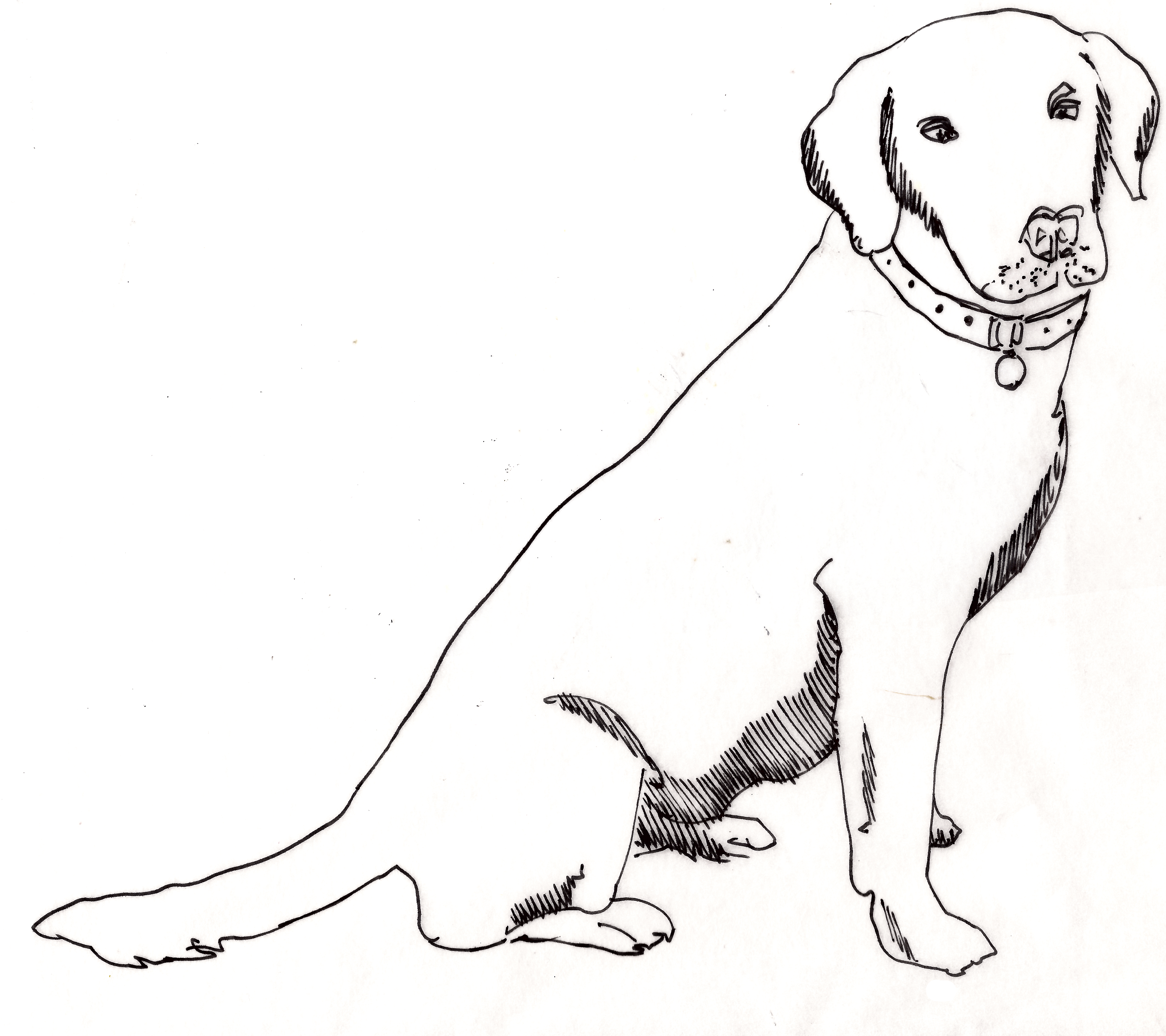 Sitting Dog Drawing
