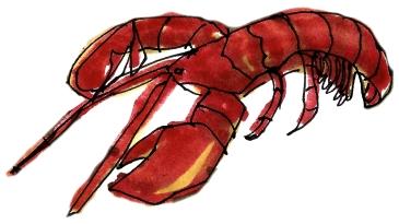 Lobster @mwoodpen