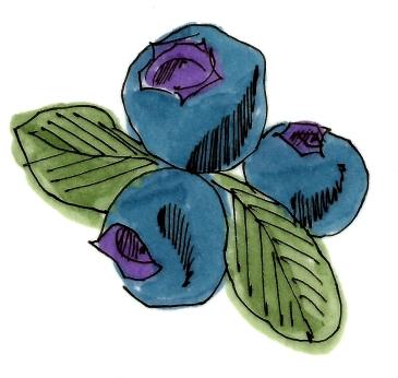 Blueberries @mwoodpen