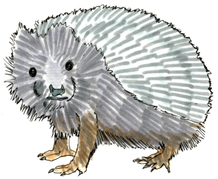 Hedgehog @mwoodpen