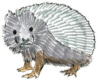 Hedgehog @mwoodpen