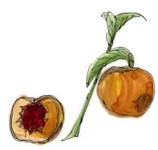 m wood peach
