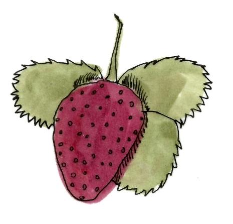 Raspberries @mwoodpen