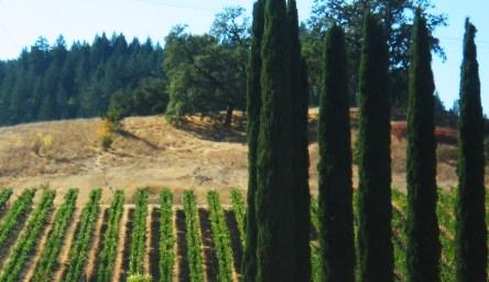 Napa Trees 2008 @mwoodpen
