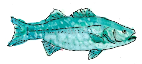 COASTAL Blue Fish* 1