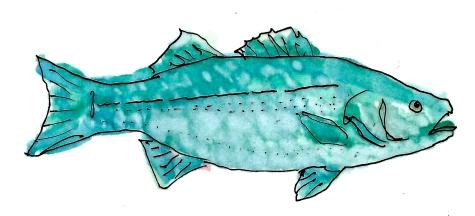 COASTAL Blue Fish* 1