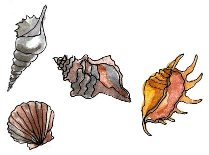 Sally Sells Seashells @mwoodpen