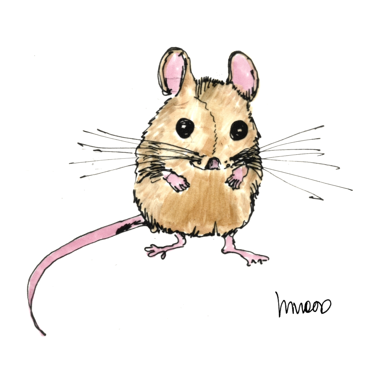 M Wood Mouse