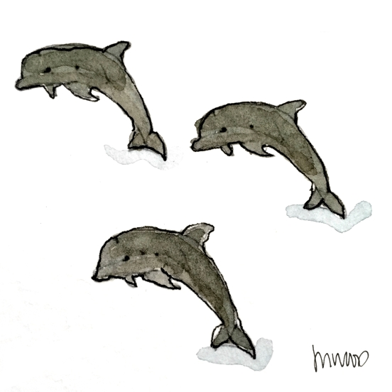 Dolphins @mwoodpen