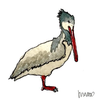 Pelican @mwoodpen